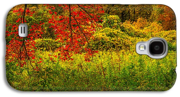 Branches Of Red Galaxy S4 Case by Karol Livote