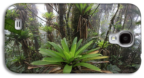 Epiphyte Galaxy S4 Cases - Bromeliad Bromeliaceae And Tree Fern Galaxy S4 Case by Cyril Ruoso