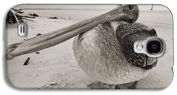Pelican Galaxy S4 Case - Brown Pelican Folly Beach Morris Island Lighthouse Close Up by Dustin K Ryan
