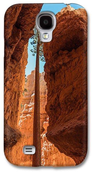 Bryce Canyon Tree Galaxy S4 Case by Joseph Smith