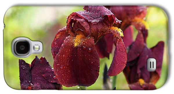 Burgundy Bearded Irises In The Rain Galaxy S4 Case