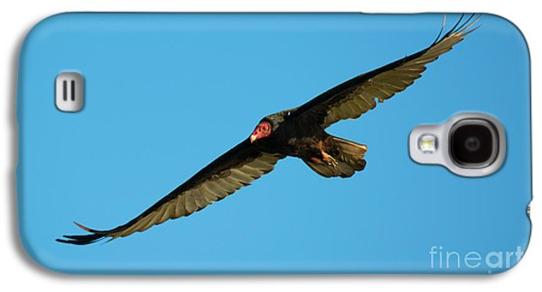 Buzzard Circling Galaxy S4 Case by Mike Dawson
