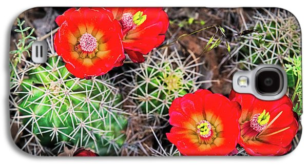 Cactus Bloom Galaxy S4 Case by Edgars Erglis