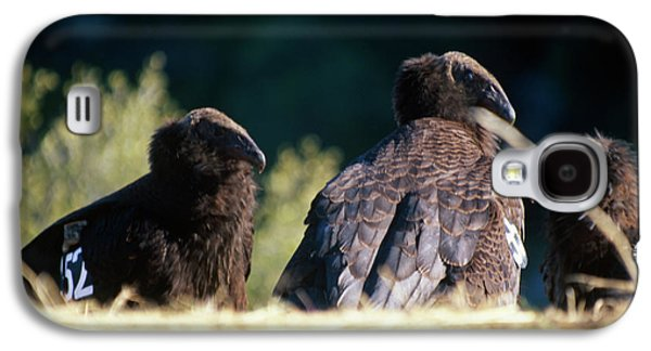 California Condors Galaxy S4 Case by Soli Deo Gloria Wilderness And Wildlife Photography