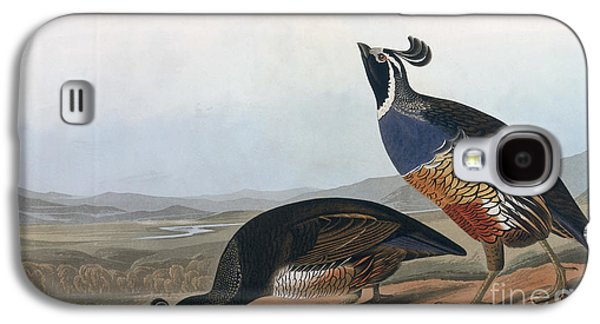 Californian Partridge Galaxy S4 Case by John James Audubon