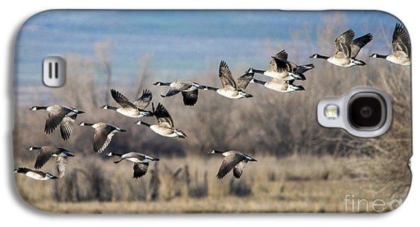 Canada  Geese Flock Galaxy S4 Case by Mike Dawson