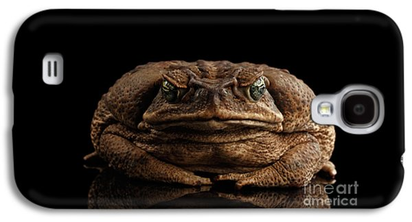 Cane Toad - Bufo Marinus, Giant Neotropical Or Marine Toad Isolated On Black Background, Front View Galaxy S4 Case