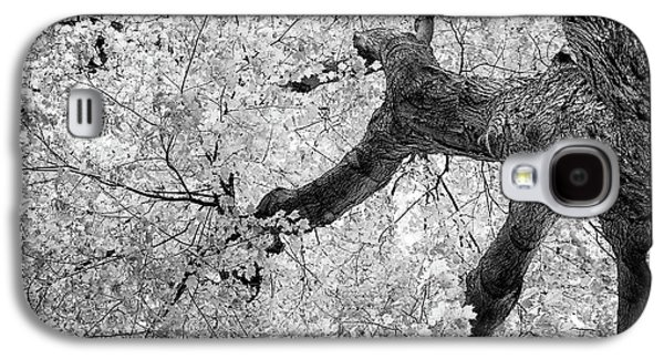 Canopy Of Autumn Leaves In Black And White Galaxy S4 Case by Tom Mc Nemar