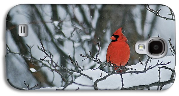 Cardinal And Snow Galaxy S4 Case by Michael Peychich
