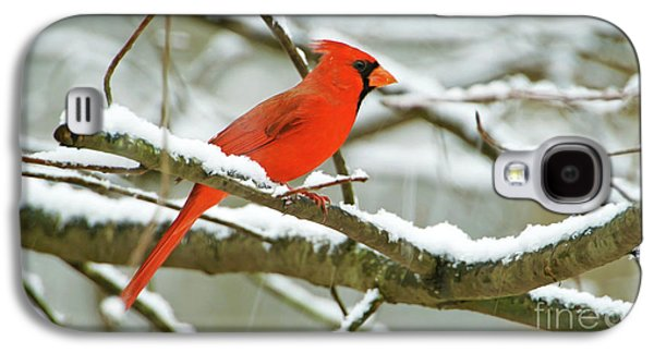 Finch Galaxy S4 Case - Cardinal In Snow by Laura D Young