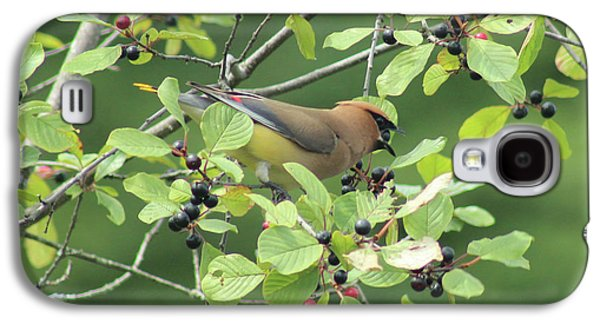 Cedar Waxwing Eating Berries Galaxy S4 Case by Maili Page
