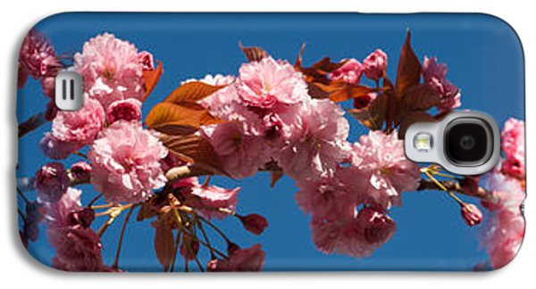 Cherry Blossom Flowers Galaxy S4 Case by Panoramic Images