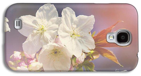 Cherry Blossom In Sunlight Galaxy S4 Case