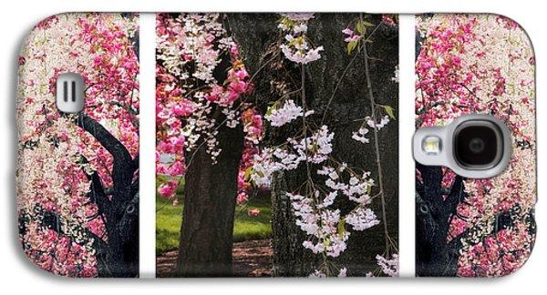 Cherry Blossom Triptych Galaxy S4 Case by Jessica Jenney