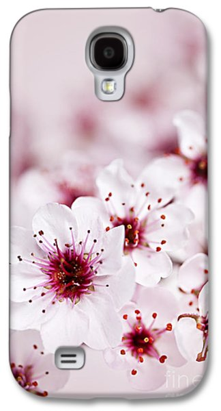 Cherry Blossoms Photographs Galaxy S4 Cases - Cherry blossoms Galaxy S4 Case by Elena Elisseeva