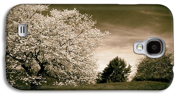 Spring Cherry In Sepia Galaxy S4 Case by Jessica Jenney