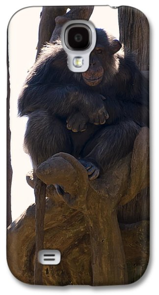 Chimpanzee In A Tree Galaxy S4 Case by Chris Flees