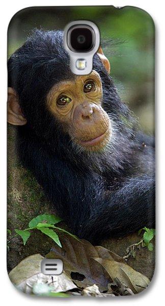 Chimpanzee Pan Troglodytes Baby Leaning Galaxy S4 Case