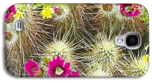 Cholla Cactus Blooms Galaxy S4 Case