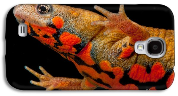 Chuxiong Fire Belly Newt Galaxy S4 Case by Dant� Fenolio