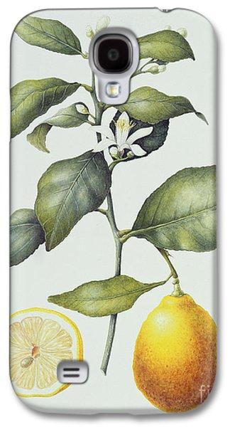 Citrus Lemon Galaxy S4 Case by Margaret Ann Eden