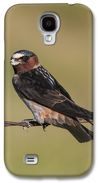 Galaxy S4 Case featuring the photograph Cliff Swallow by Gary Lengyel