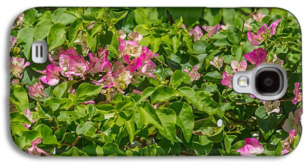 Close-up Of Flowers, Venice, Florida Galaxy S4 Case by Panoramic Images