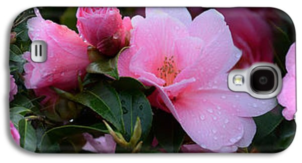 Close-up Of Pink Camellia Flowers Galaxy S4 Case by Panoramic Images