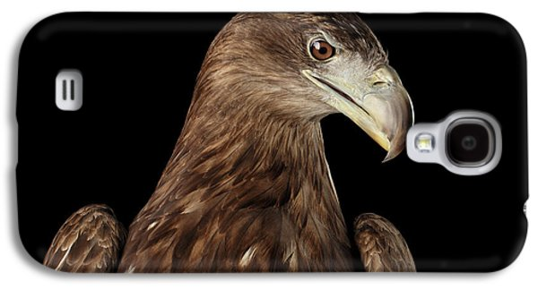 Close-up White-tailed Eagle, Birds Of Prey Isolated On Black Bac Galaxy S4 Case by Sergey Taran