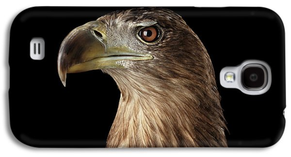 Close-up White-tailed Eagle, Birds Of Prey Isolated On Black Background Galaxy S4 Case by Sergey Taran