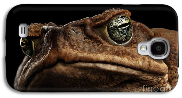 Closeup Cane Toad - Bufo Marinus, Giant Neotropical Or Marine Toad Isolated On Black Background Galaxy S4 Case
