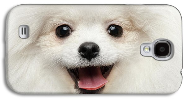 Closeup Furry Happiness White Pomeranian Spitz Dog Curious Smiling Galaxy S4 Case
