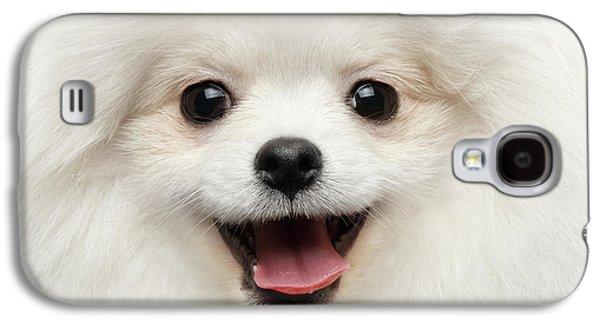 Dog Galaxy S4 Case - Closeup Furry Happiness White Pomeranian Spitz Dog Curious Smiling by Sergey Taran
