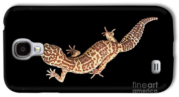 Closeup Leopard Gecko Eublepharis Macularius Isolated On Black Background Galaxy S4 Case by Sergey Taran