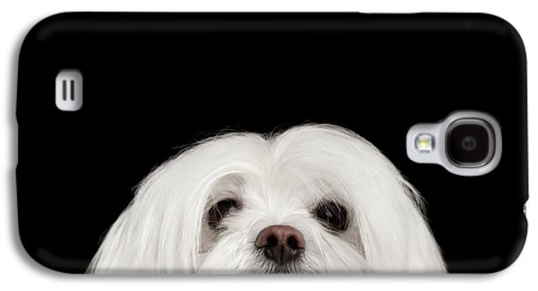 Dog Galaxy S4 Case - Closeup Nosey White Maltese Dog Looking In Camera Isolated On Black Background by Sergey Taran