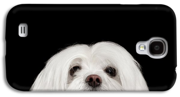 Closeup Nosey White Maltese Dog Looking In Camera Isolated On Black Background Galaxy S4 Case