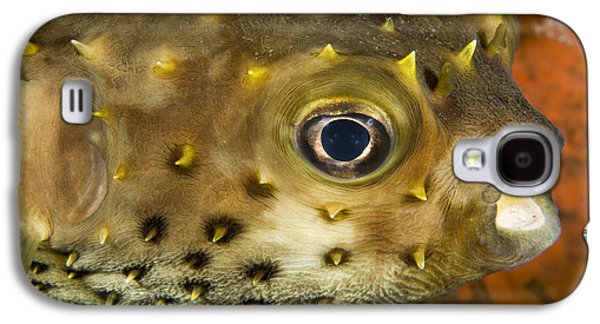Closeup Of A Yellowspotted Burrfish Galaxy S4 Case