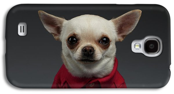 Closeup Portrait Chihuahua Dog In Stylish Clothes. Gray Background Galaxy S4 Case