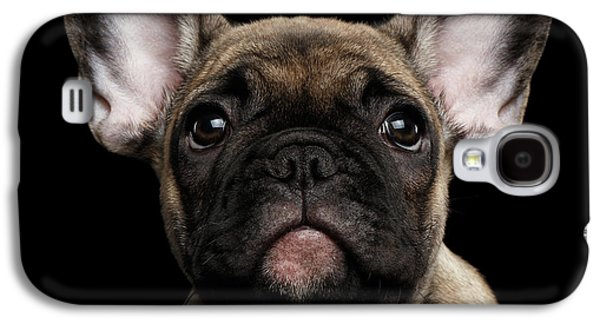 Closeup Portrait French Bulldog Puppy, Cute Looking In Camera Galaxy S4 Case