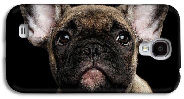 Dog Galaxy S4 Case - Closeup Portrait French Bulldog Puppy, Cute Looking In Camera by Sergey Taran