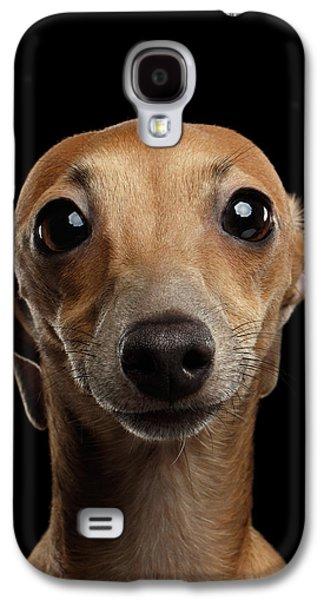Dog Galaxy S4 Case - Closeup Portrait Italian Greyhound Dog Looking In Camera Isolated Black by Sergey Taran