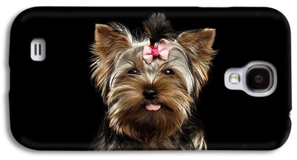 Dog Galaxy S4 Case - Closeup Portrait Of Yorkshire Terrier Dog On Black Background by Sergey Taran
