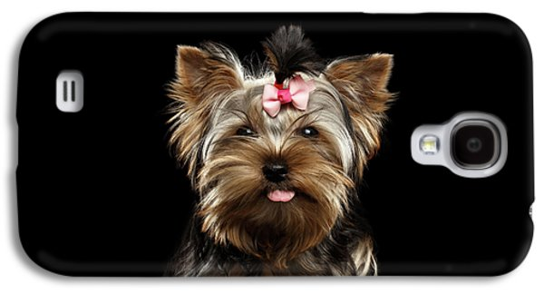 Closeup Portrait Of Yorkshire Terrier Dog On Black Background Galaxy S4 Case