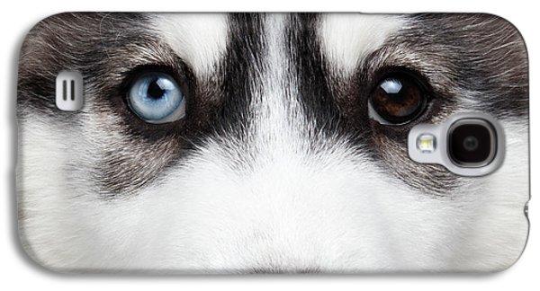 Dog Galaxy S4 Case - Closeup Siberian Husky Puppy Different Eyes by Sergey Taran