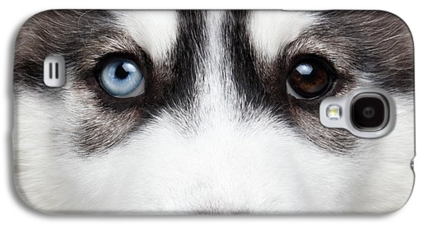 Closeup Siberian Husky Puppy Different Eyes Galaxy S4 Case
