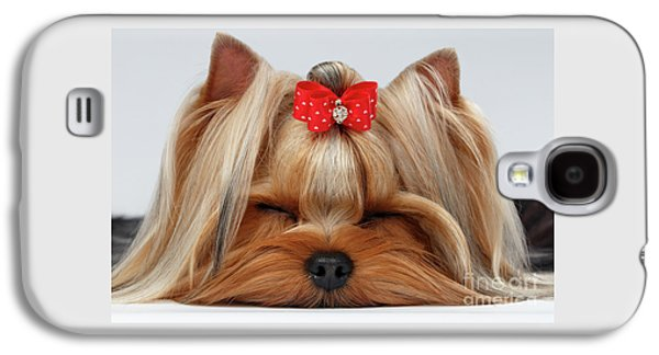Closeup Yorkshire Terrier Dog With Closed Eyes Lying On White  Galaxy S4 Case by Sergey Taran