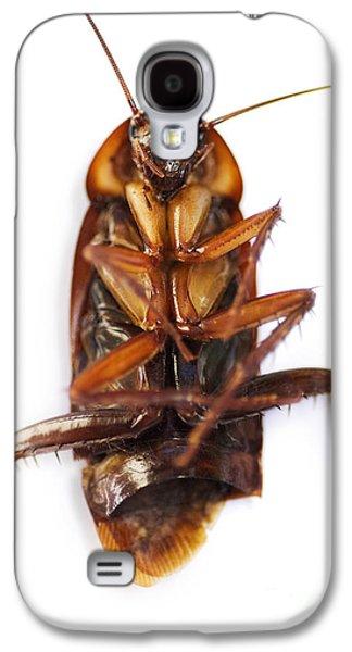 Cockroach Carcass Galaxy S4 Case by Jorgo Photography - Wall Art Gallery