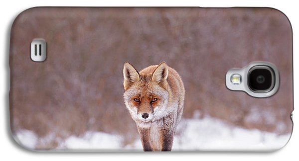Cold Encounter - Red Fox In The Snow Galaxy S4 Case
