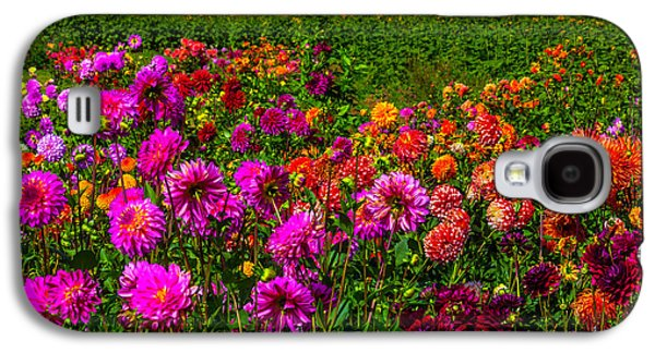 Colorful Dahlias Oregon Galaxy S4 Case by Garry Gay
