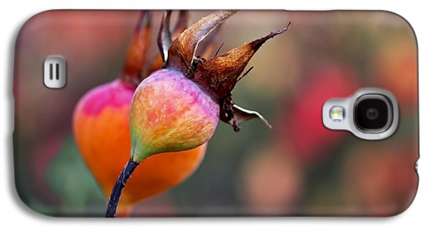 Colorful Rose Hips Galaxy S4 Case by Rona Black